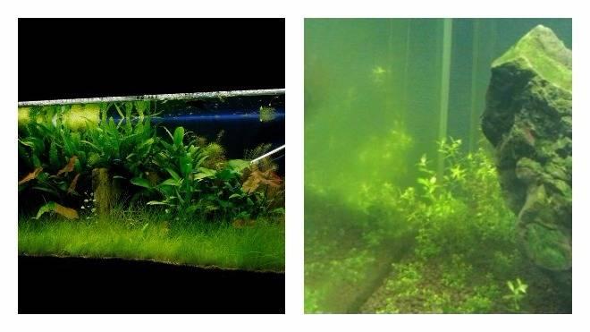 Почему зеленеет вода
