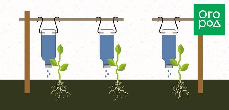 Капельный полив деревьев своими руками