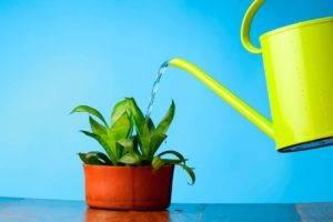 Как сделать воду мягкой в домашних условиях
