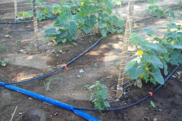 Поливальные системы для огорода